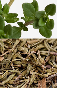 Thyme in the TableFare Spice Library